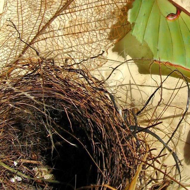 La sindrome del nido vuoto: cos'è e come gestirla!