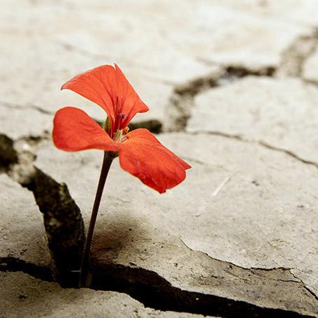 La resilienza: cos'è e come svilupparla!